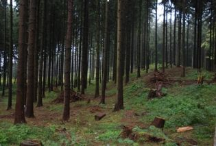 Wzgórze Harzhorn na fotografii umieszczonej na stronie Wolnego Uniwersytetu w Berlinie (www.geschkult.fu-berlin.de).