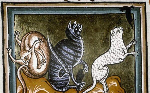 Kotki polują na myszy, ale kto wie, może za chwilę ktoś zapoluje na nie i zrobi z nich wykwintne danie?