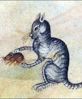 Ciekawe czy z tego kota wyszłaby dobra potrawka?