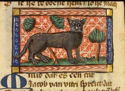 Czemu ten kot ma tak nietęgą minę? Czyżby ktoś już go chciał wsadzić do wora?