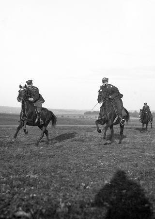 """Ułańskie konie miały za sobą wieloletni trening, o którym rzecz jasna nie zapominały na """"emeryturze""""."""