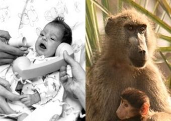 Baby Fae i pawian...