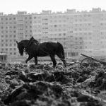W latach sześćdziesiątych konna orka z nowymi blokami w tle nie była wcale takim niezwykłym widokiem (fot. Robert Kosieradzki).