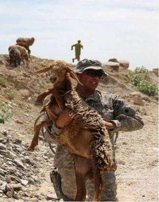 Choć żołnierz na zdjęciu niesie owcę, nie kozę, ewentualny posiłek z niej przyrządzony tak jak porucznik Parnell okupił zapewne niestrawnością i potrójną dawką cripo.