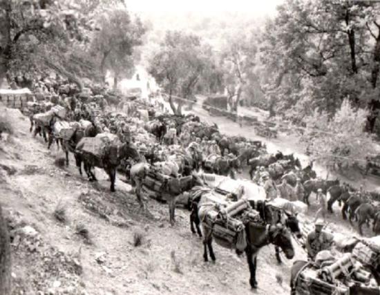 Karawana mułów objuczona amunicją.