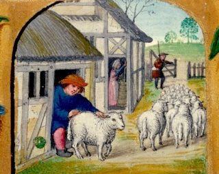 Średniowieczny pastuch czyhający na bezbronną owcę... Nawet ponad 50% nastolatków w średniowieczu dopuszczało się aktów zoofilii.
