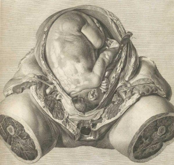 Ilustracja z atlasu anatomicznego Smelliego. Jaka była cena jego odkryć?
